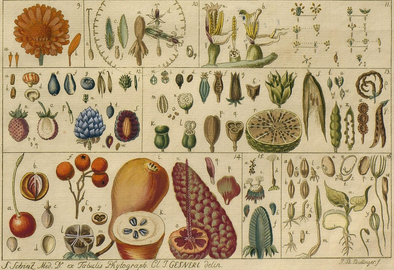 Resultado de imagen de jardin botanico madrid coleccion